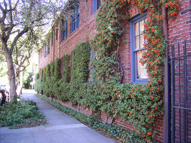 Charming apartments covered in ivy in Portland's The Pearl District.