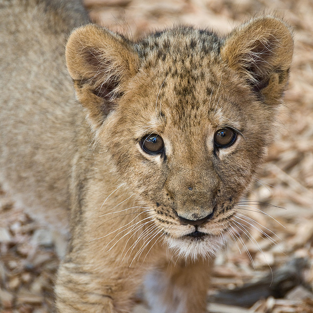 Take your baby to see the new arrivals at Oregon Zoo this summer. Image courtesy, ArtBrom