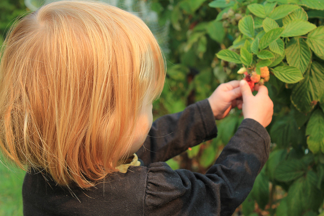 U-pick farms are a great way to get outside and enjoy the fruits of mother nature. Image courtesy, Various Brennemans